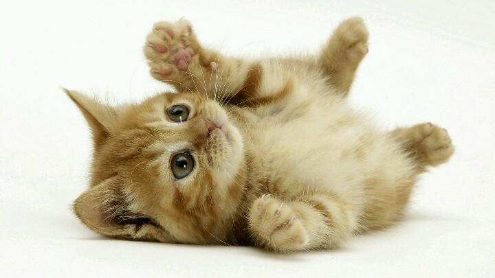 二次元可爱动物手机壁纸